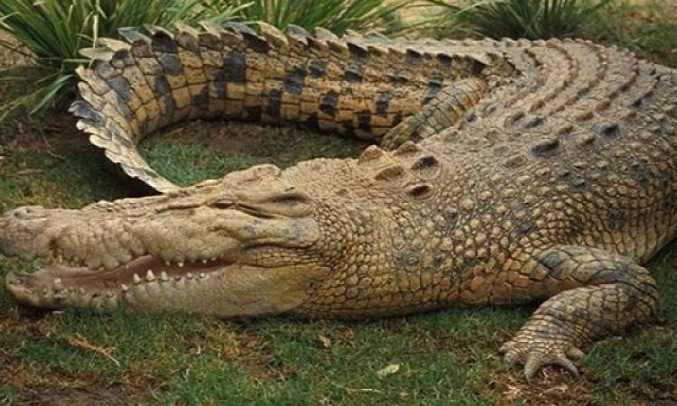 تمساح ضخم يهاجم طفلا فى مملكة السحر!!