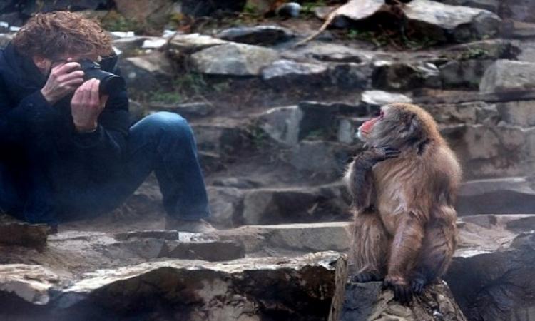 بالصور.. قرد يسرق هاتف أحد السائحين بحديقة يابانية