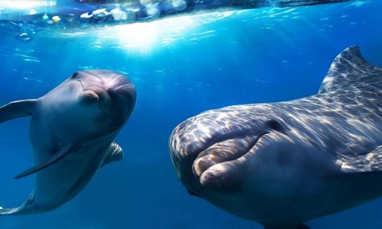 حقائق خاطئة عن الحيوانات : ذاكرة السمكة وعمى الخفافيش !!