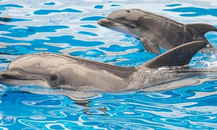 مفاجأة .. الدلافين بتتكلم زينا : وسجلولها كمان !!