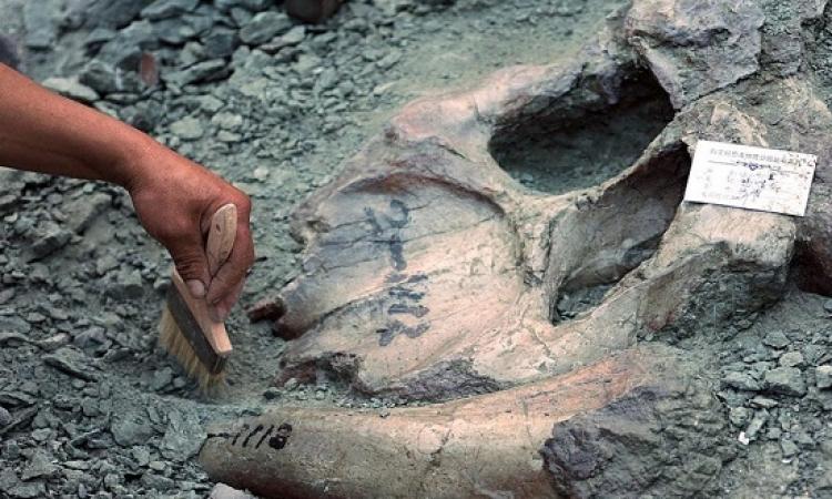 حفريات تكشف عن ديناصور وديع بلا أسنان