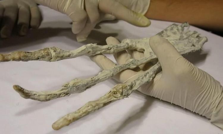 بالفيديو.. العثور على جمجمة ويد لكائن فضائي في بيرو