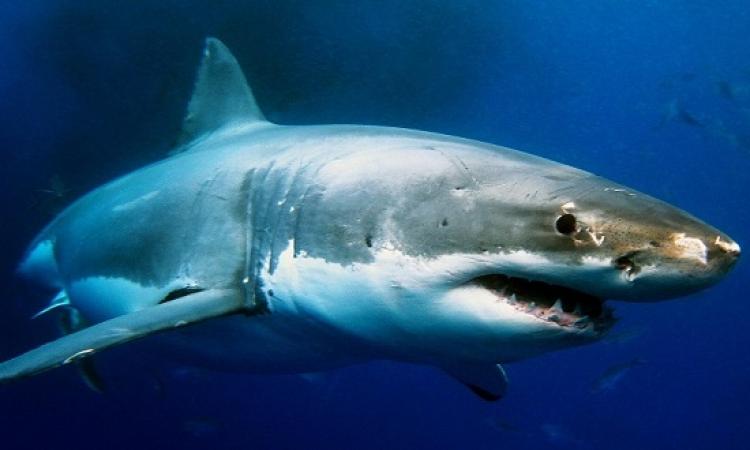 معهد علوم البحار ينفى رصد أسماك قرش بالعين السخنة