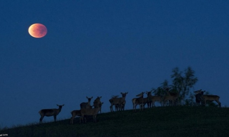 ترقب ظهور القمر الدموى فى ظاهرة فلكية نادرة