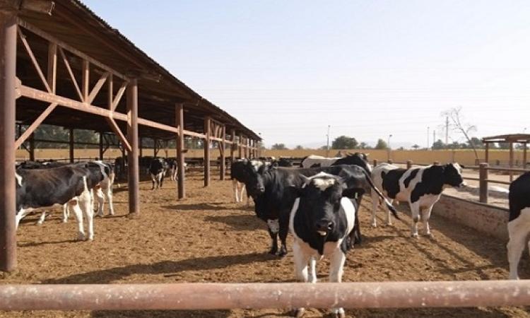 """وزارة الزراعة تبدأ صرف قروض المرحلة الثانية لمشروع """"البتلو"""" بعد العيد"""