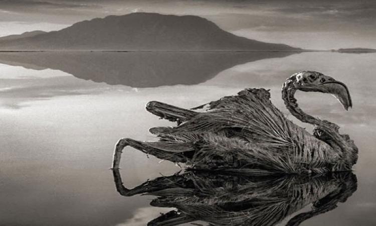 لغز بحيرة ناترون التى تحول الحيوانات والطيور إلى أحجار ؟!