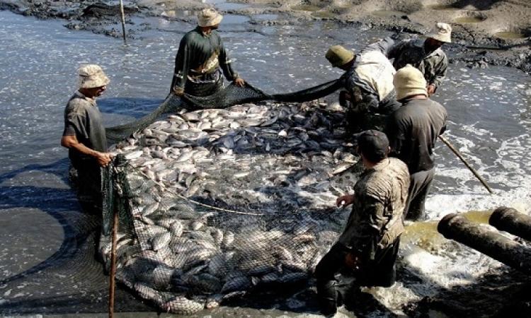 الثروة السمكية .. فُرص لم تستغل !!
