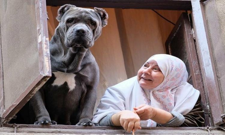 """بالصور.. تعرف على سر صور """"السيدة والكلب"""" بالدرب الأحمر"""