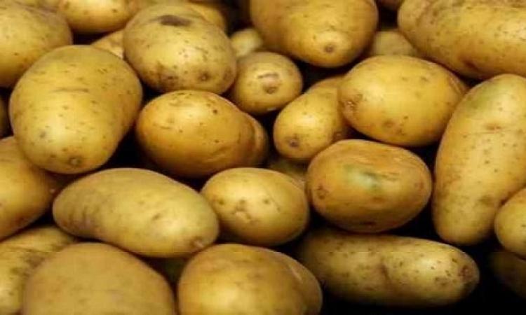 روسيا ترفع الحظر عن البطاطس المصرية وبدء التصدير الأربعاء المقبل