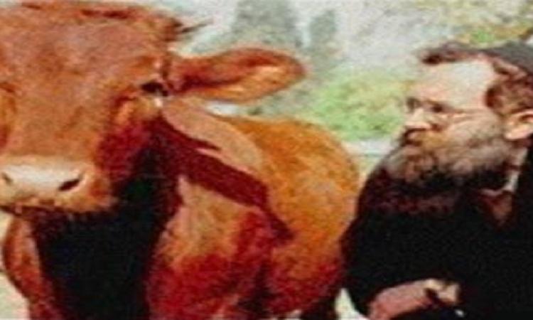 بالفيديو .. ولادة «العجل الأحمر» إشارة لهدم الأقصى وبناء الهيكل المزعوم
