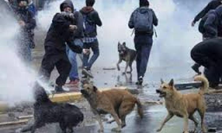 فض 4 مسيرات لإخوان الإسكندرية  والقبض على 25 حتي الآن