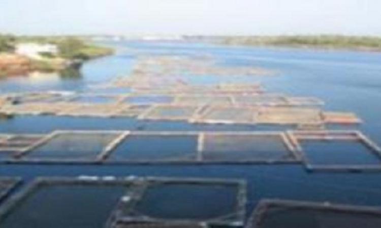 بالفيديو..إزالة الأقفاص السمكية بنهر النيل في كفر الشيخ