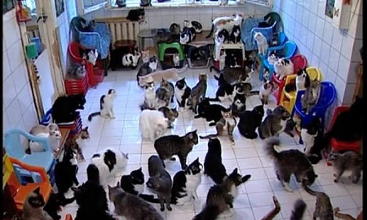 بالفيديو .. أمرأة تعيش مع 130 قطة