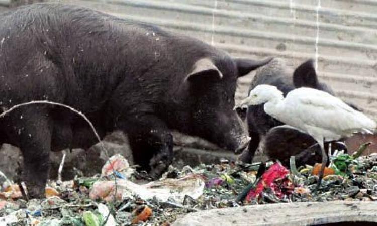 طوارئ بمستشفيات بني سويف بسبب أنفلونزا الطيور والخنازير