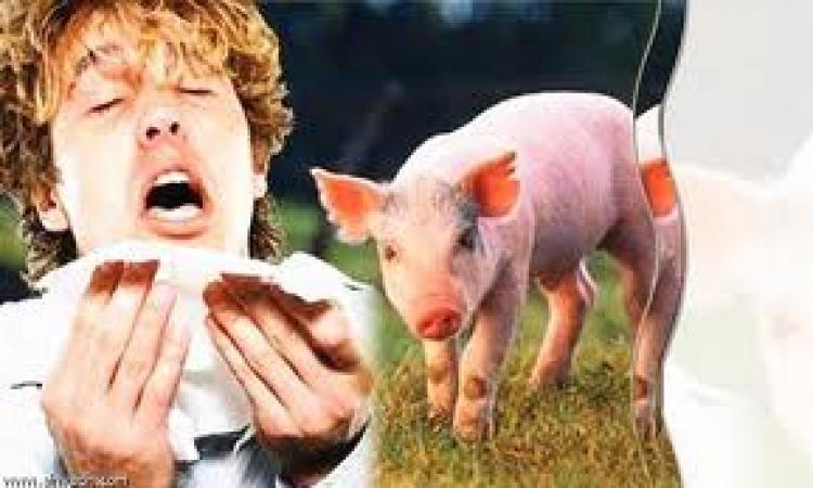 صحة الإسماعيلية تنفي وفاة شخص بأنفلونزا الخنزير