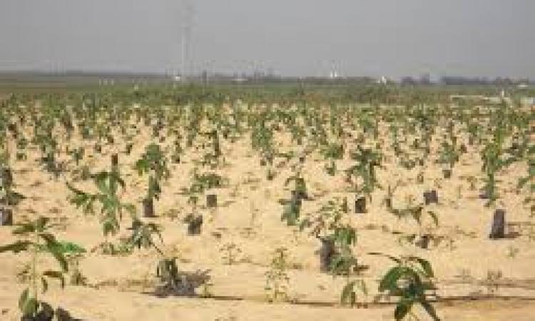 الإمارات تعرض 3 مليارات جنيه لاستصلاح 200 ألف فدان بالصحراء الغربية
