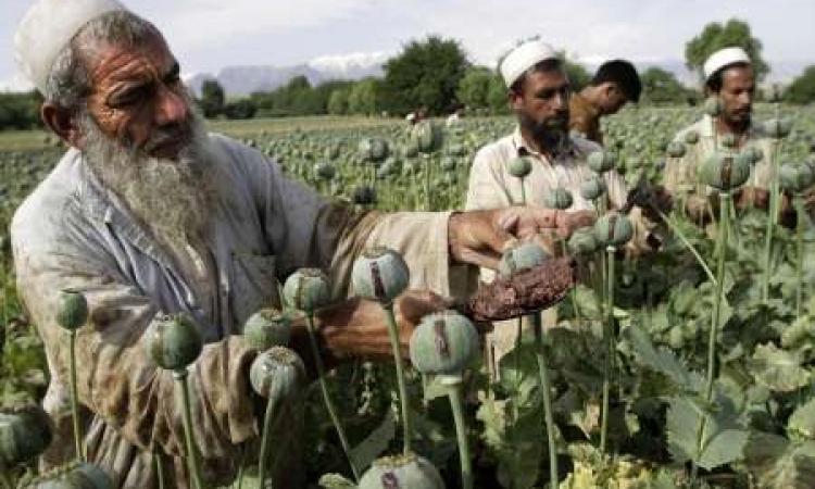 موسكو : أمريكاوالناتو مسؤولتان عن زيادة إنتاج المخدرات في أفغانستان