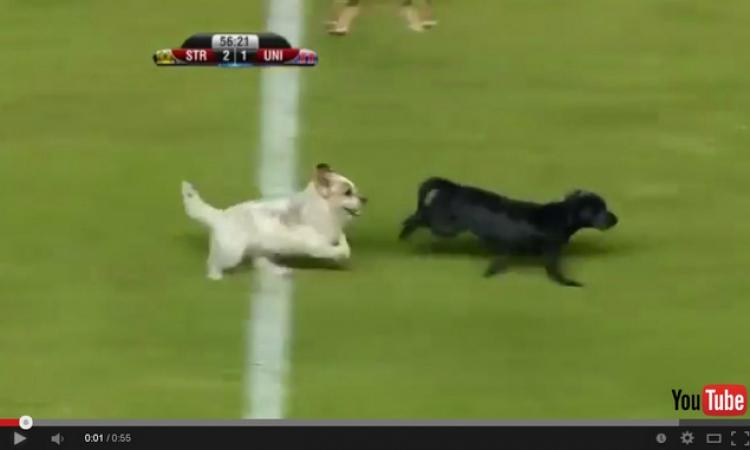 بالفيديو.. كلب ضال ضحية لاعب غاضب جدا