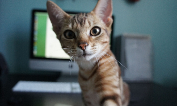 بالصور.. حتى الحيوانات تدخل عالم  «سيلفى»