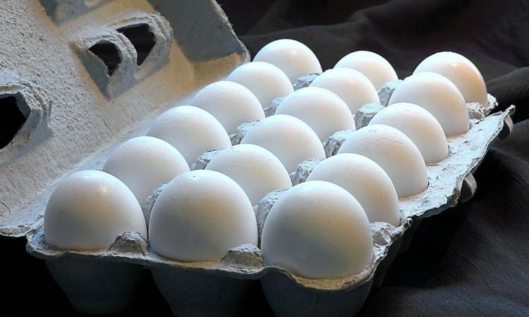 الجسم يمتص بروتين البيض بشكل تام بنسبة 100%