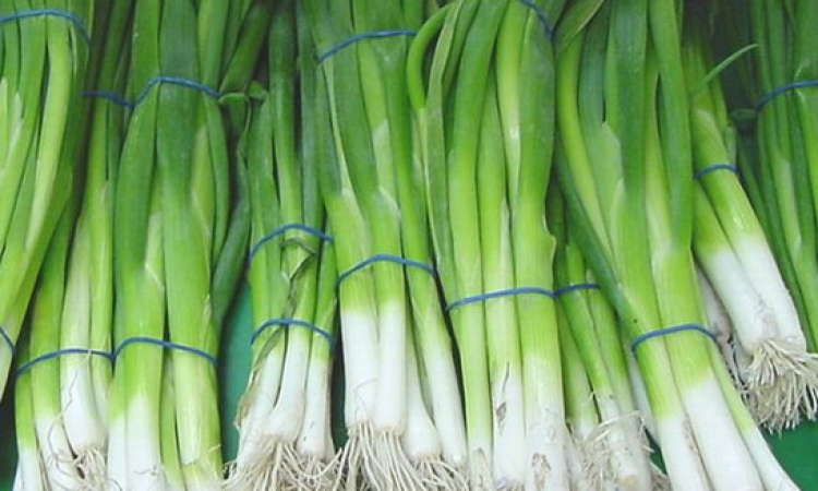 تعرف على فوائد البصل الأخضر.. ابرزها هيقوى مناعتك