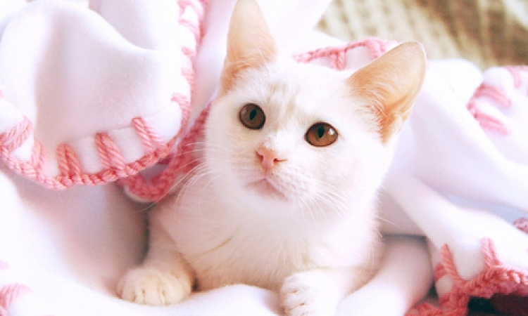 فضلات القطط قد تساعد فى علاج السرطان