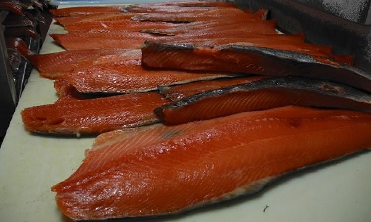 السمك ينمى الذكاء ويقلل خطر الإصابة بأمراض القلب