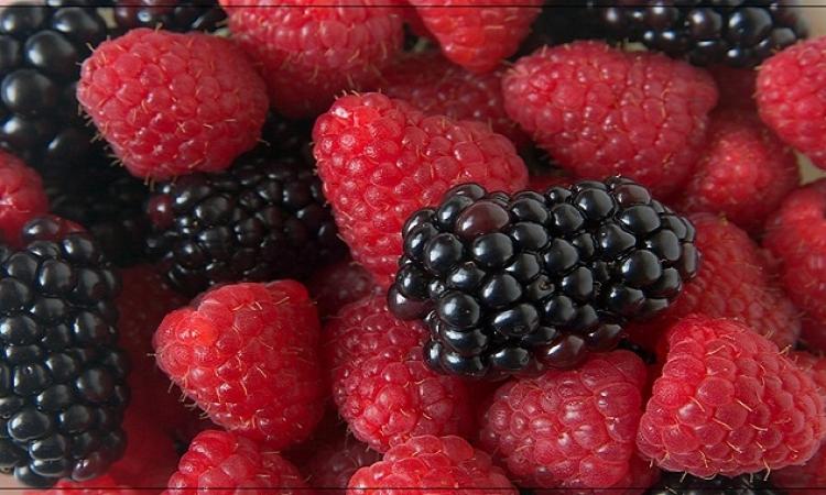 التوت البرى يقلل من الآثار السلبية للنظام الغذائى عالى الدهون
