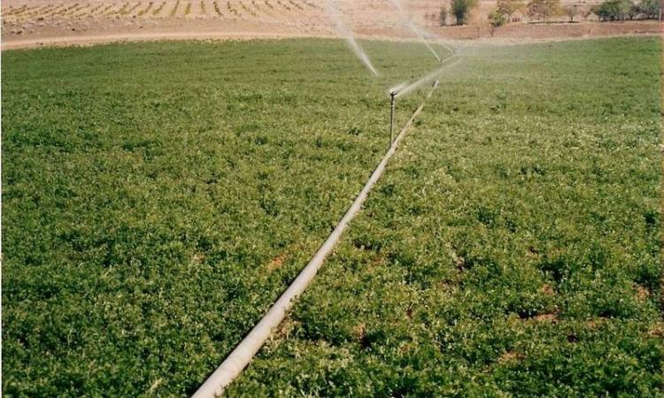 """وزير الزراعة لـ""""السيسي"""": بدءنا المرحلة الأولي من استصلاح 4 ملايين فدان"""