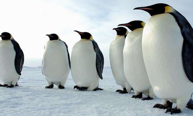 رحلة ممتعة في عالم ملك الطيور البحرية