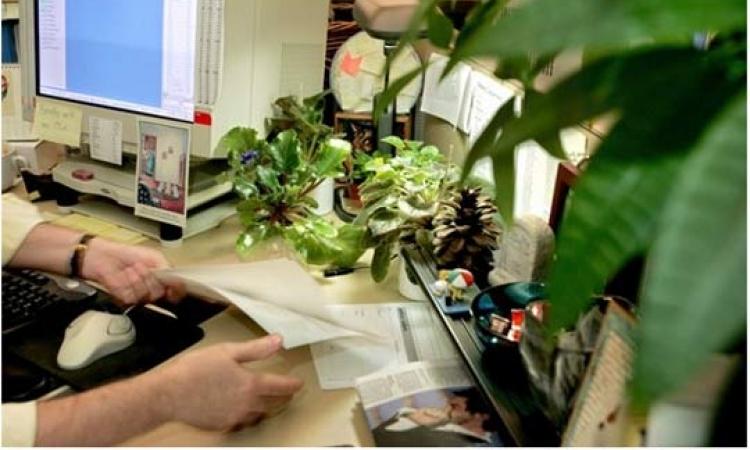 النباتات في مكان عملك تساعدك على التركيز في العمل