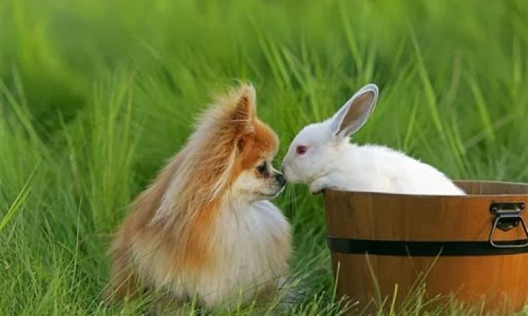 بالصور.. شاهد رومانسية الحيوانات البرية !!