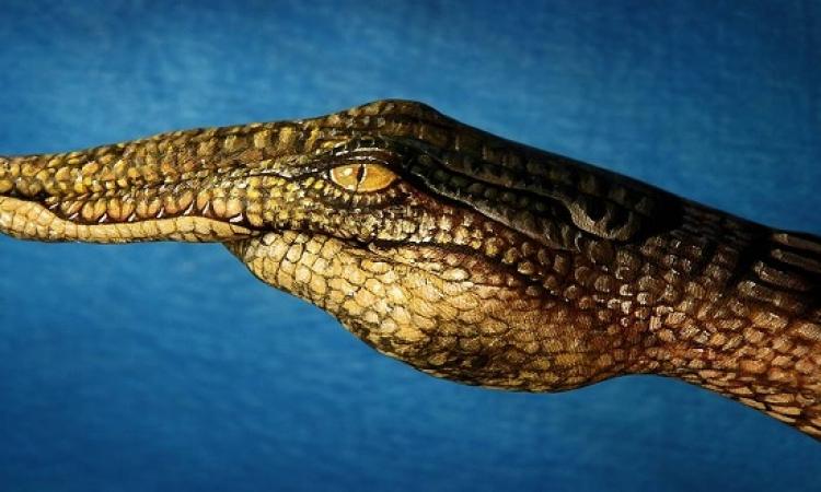 بالصور .. إبداع فن رسم الحيوانات على اليد !!