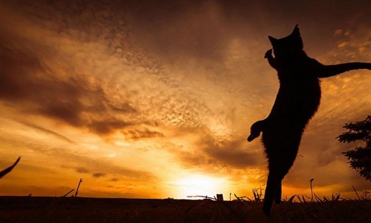 بالصور .. شاهد وابتسم .. قطط تتحول إلى نينجا !!