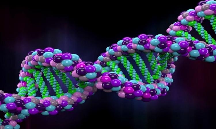 اكتشاف حلقة فى الحمض النووى تدمر السرطان