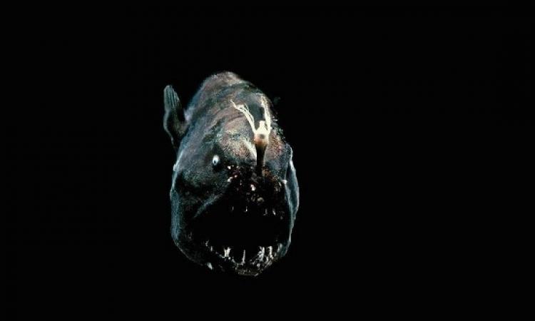 بالفيديو .. للمرة الأولى تصوير شيطان البحر الأسود ( للكبار فقط )