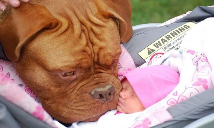 """بالصور .. كلاب """" كبيرة """" تحرس أطفال """" صغيرة """" !!"""