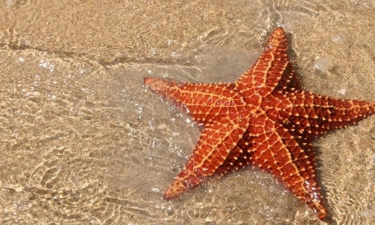 كشف لغز نفوق الملايين من نجم البحر على سواحل كاليفورنيا ؟