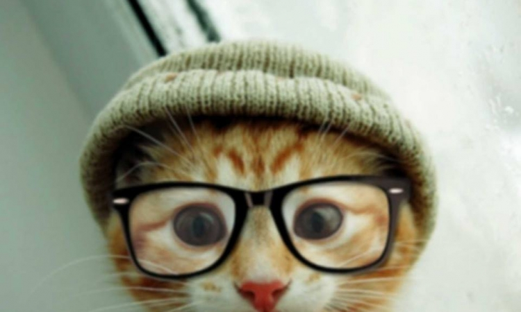بالصور ..أنت لن تزيد الكتاب جمالًا.. ولكن ربما القطط تفعل!!