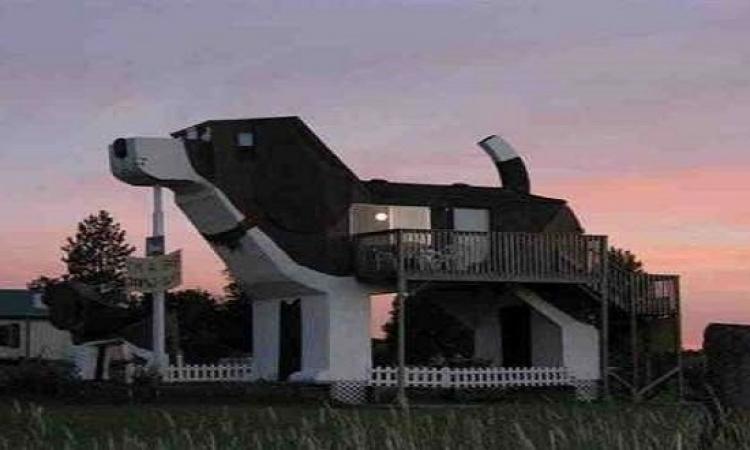بالصور .. منزل على شكل كلب الإقامة فيه ليلة واحدة بـ98 دولارًا