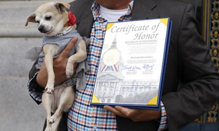 """""""وهى جت عليها"""" .. فريدا .. كلبة تصبح عمدة سان فرانسيسكو"""