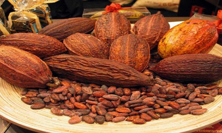 الكاكاو يساعد مرضى الفشل الكلوى وتحسين الأوعية الدموية