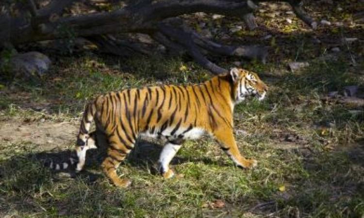 حيوانات مهددة بالإنقراض فى العام الجديد