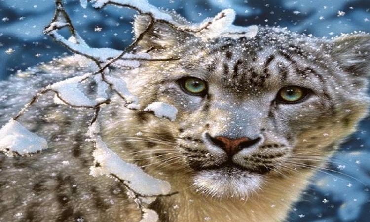 بالصور .. روعة جمال الفهد القطبى