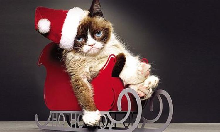 قطة تملك 64 مليون جنيه إسترليني ومازالت عبوسة