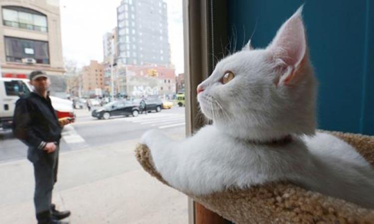 افتتاح أول مقهى للقطط فى نيويورك