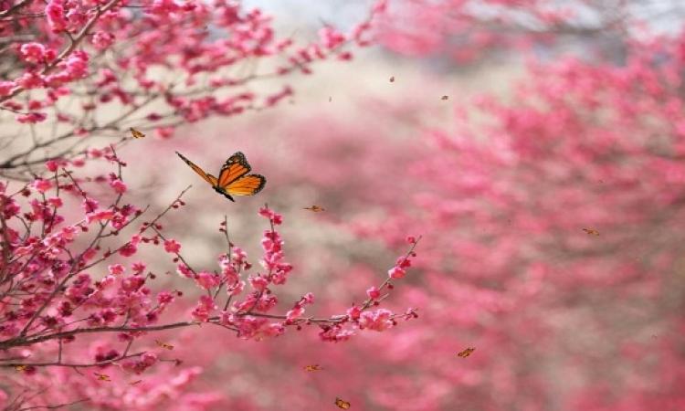 بالصور .. روعة وسحر جمال الطبيعة الوردية