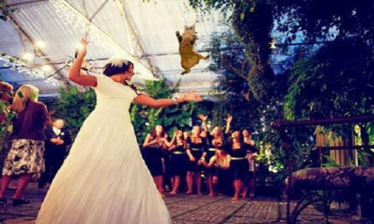 القطة بديلا عن باقة الزهور بحفلات الزفاف
