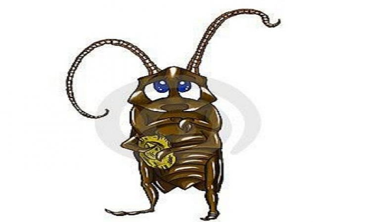 دراسة.. للصراصير أيضا شخصيات مختلفة مثل الإنسان