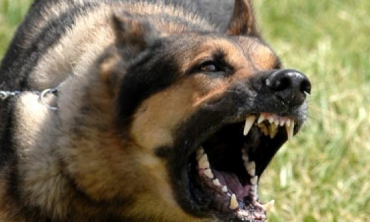 """محكمة كرواتية تصدر أمرا بإلزام كلب بـ""""عدم النباح"""" طوال الليل"""